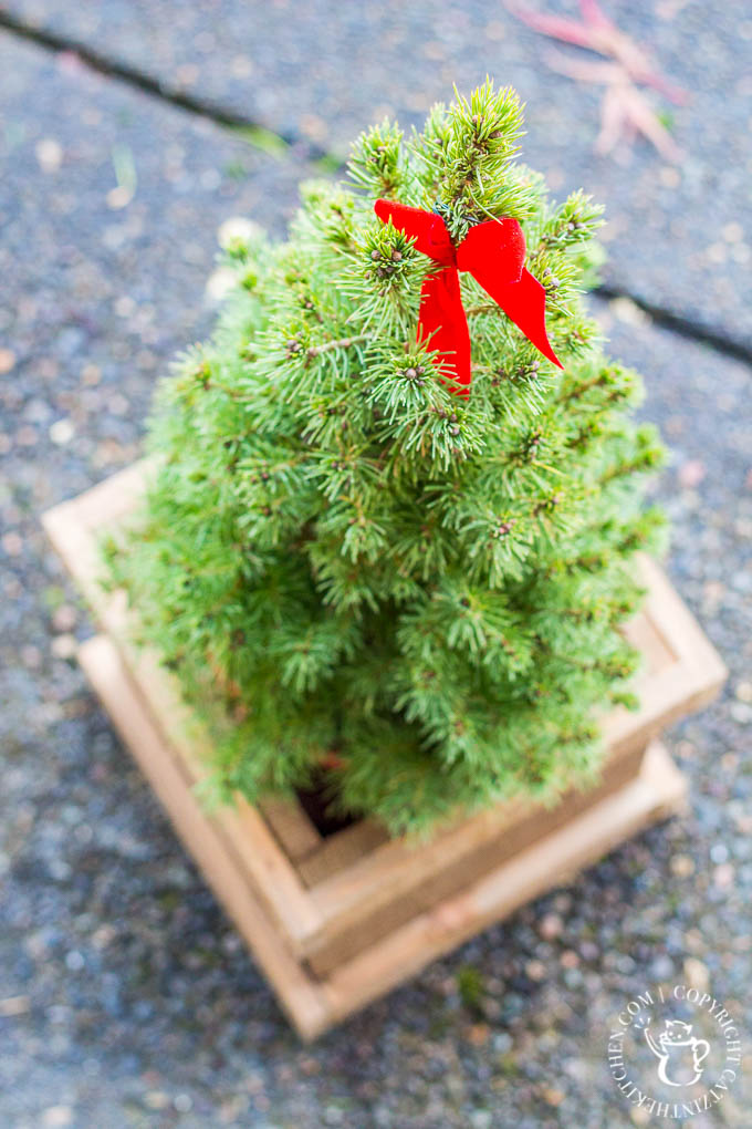 Festive touches for the holidays don't get much easier or cheaper than these cute little trees in this $4 DIY cedar planter!